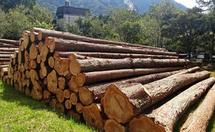未被列入国标的优质木材