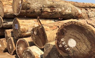核桃木的资料和特点