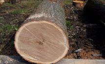 樱桃木是一种什么木材?