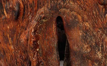 櫻木木材的相關知識