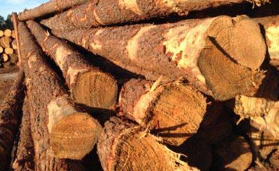 樱桃木的分类和用途