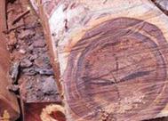 绒毛黄檀木材树种特性和用途