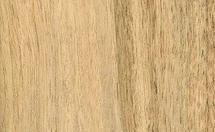 白乌木木材树种详解