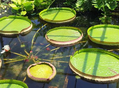 四种世界珍稀植物介绍|珍惜植物图片大全
