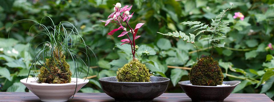 苔蘚盆景的繁殖和制作方法|苔蘚盆景圖片