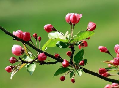 春天有哪些花开?