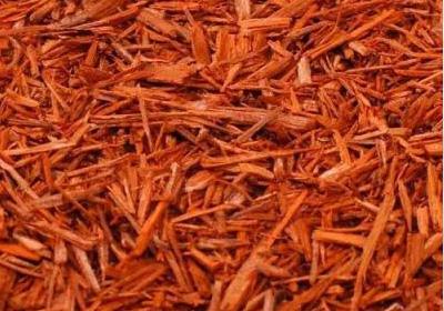苏木形态特征和苏木药用价值
