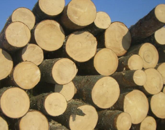 开年大盘点:木材利润哪个高?