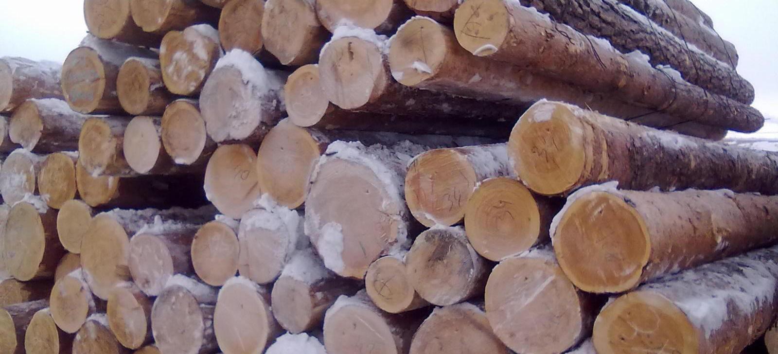 年后原木市场怎么样?