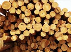 【周评】<font color=#FF0000>橡胶木</font>涨势强劲  北美材市场行情倒挂