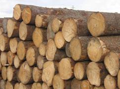 【周评】紧缺木材出现替代品  各港口报价基本稳定