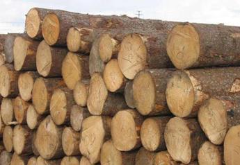 【周评】紧缺木材出现替代品  各港口明仕亚洲官网基本稳定
