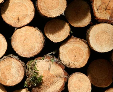 【周评】上周木材价格稳中有降 <font color=#FF0000>橡胶木</font>进入下行通道