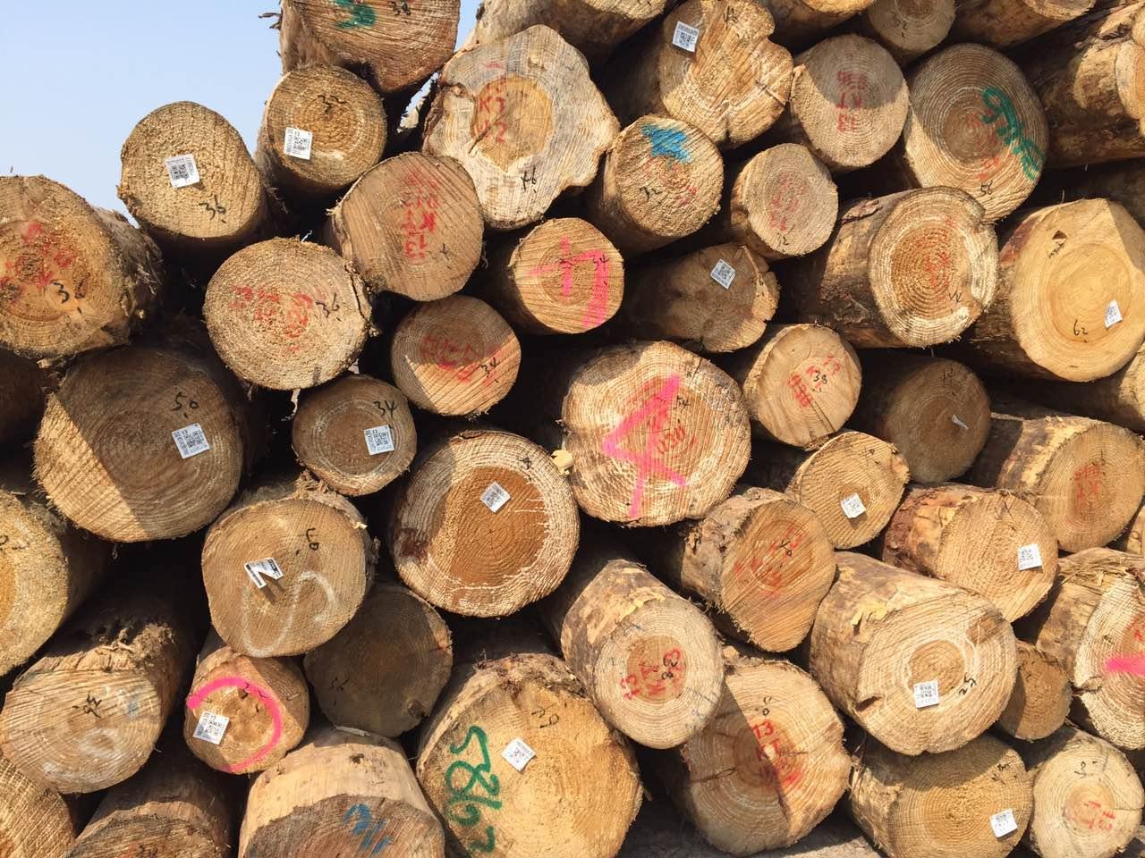【周评】木材整体行情冷淡,出货速度减缓