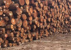 【周评】港口木材市场萧条,整体价格趋于稳定