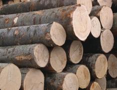 七月上半月红木市场大事件盘点