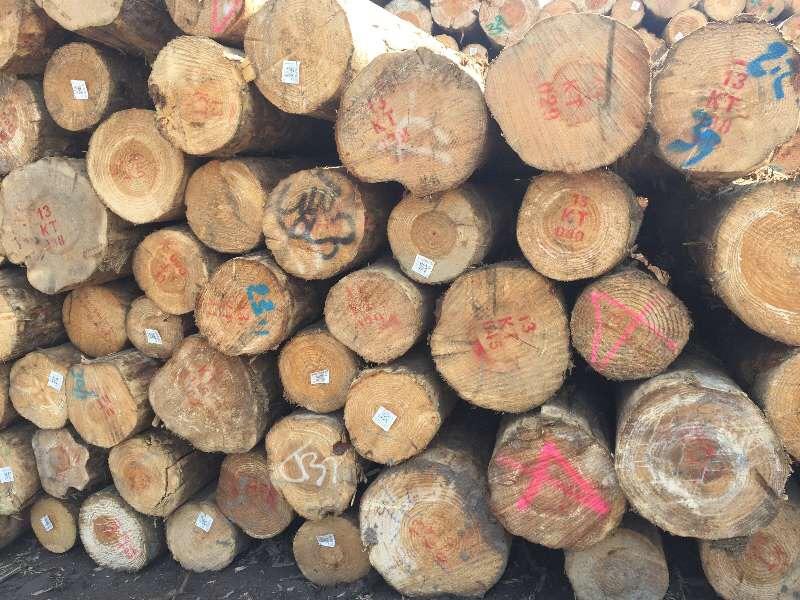 【周评】环保督查愈演愈烈,木材走货速度缓慢
