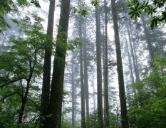 四川省2016年林业生态服务价值达1.72万亿元