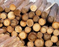 八大因素影响原木家具木材品质