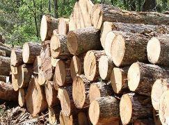 【周评】木材整体稳中有升  部分价格跌幅明显