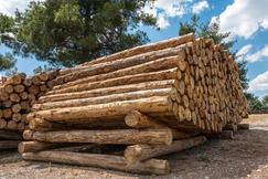 【周评】部分材种缺货严重,木材行情依旧跌宕