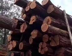 """""""金九银十""""来到,国内木材市场热点或将被激活"""
