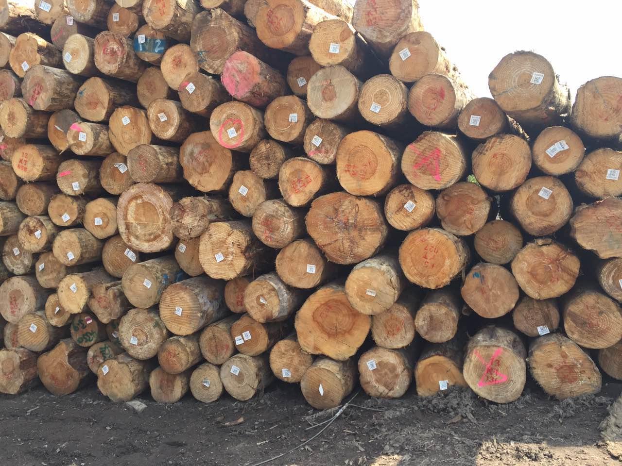 【周评】节后各地陆续开工,木材价格持续走高
