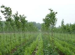 2018年安徽省计划营造林730万亩