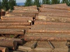加拿大软木出口美国 数量下降但价值上升