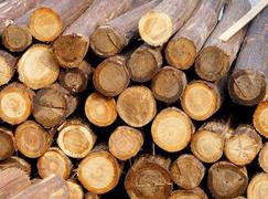 【周评】部分地区需求变缓,木材价格维持稳定