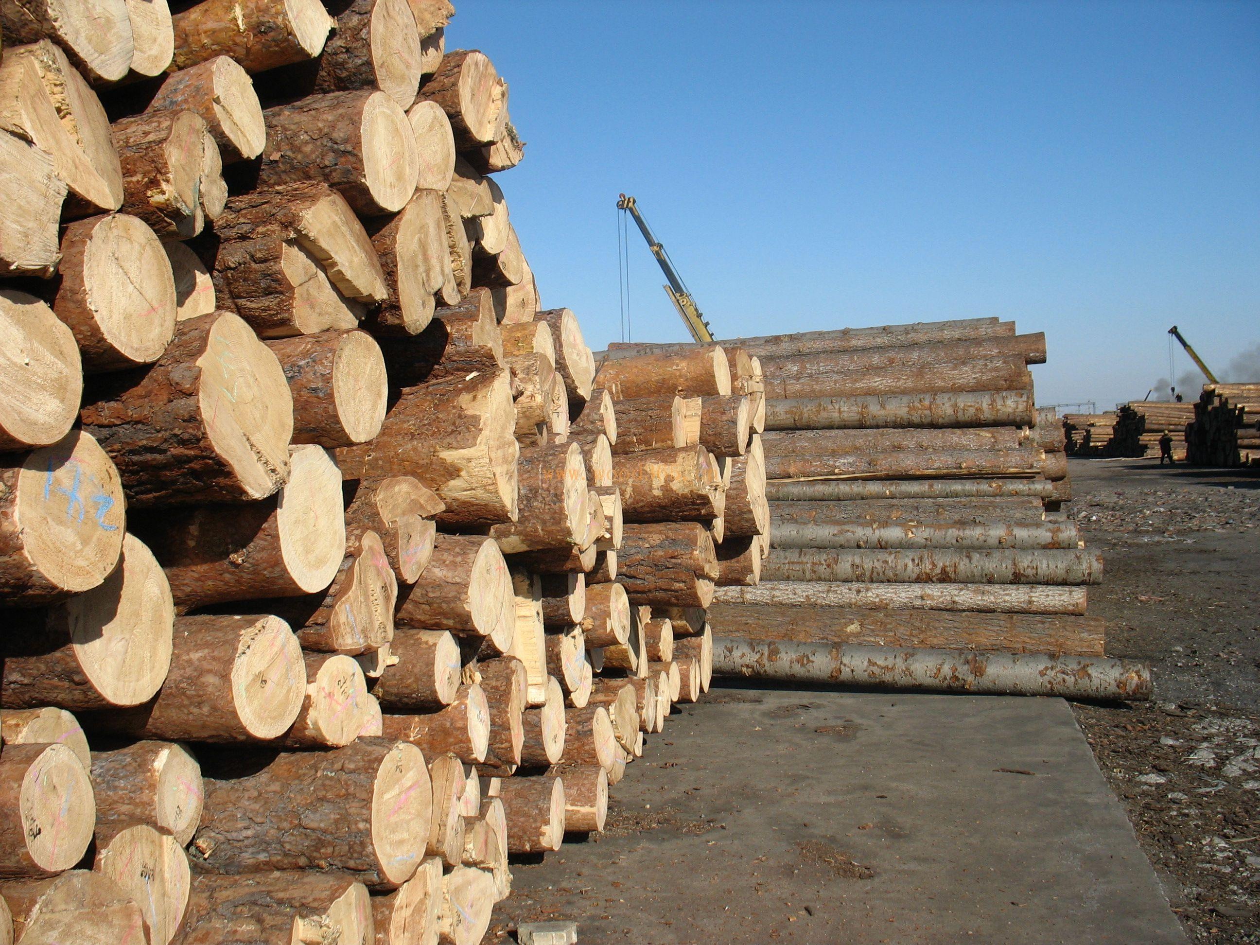【周评】市场需求缓慢下跌 木材行情步入稳定