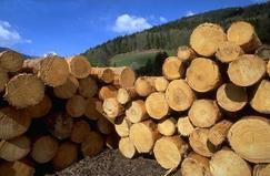 美国俄勒冈州原木价格再创25年来新高