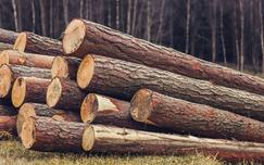 2017年美国软木木材进口下降3%