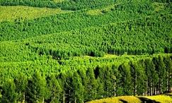 甘肃省再添4家国家林业重点龙头企业