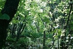 安徽省完成春季人工造林42.31万亩
