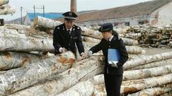 满归林业局森防站加强涉外木材检疫力度