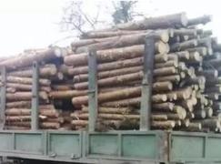 乌克兰燃料木的出口量是未加工木材的600倍