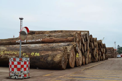 2018年张家港木材交易量迅速萎缩,价格跌入冰点!