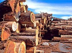 2018年北美<font color=#FF0000>木材市场</font>前高后低