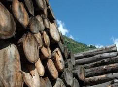 2019年缅甸仍将减少砍伐生产量