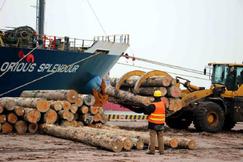 春节以来新民洲港接卸原木3.47万方