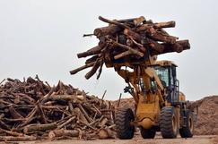 """林产化工产业规模近万亿,<font color=#FF0000>国家林草局</font>在江苏布局""""新高地"""""""