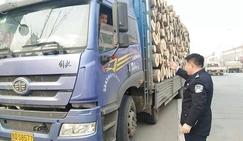 山东莒县查处一起无<font color=#FF0000>木材运输</font>证运输木材案