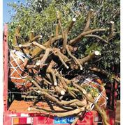 云南富民县一起偷运木材案被截获