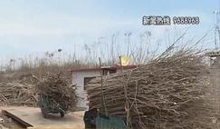 沭阳新河镇一家违规<font color=#FF0000>木材</font>厂被取缔!