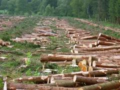 俄罗斯森林资源逐年减少 责任在中国木材加工企业?