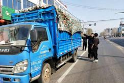 岚山区治理木材边余料运输车辆抛洒现象