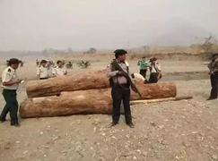 缅甸<font color=#FF0000>木材走私</font>猖獗 3年查获走私木材14万吨