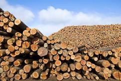 中国木材进口转向全球森林资源