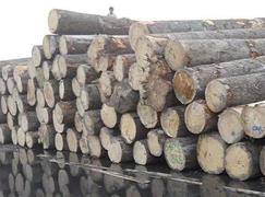 欧洲虫灾肆虐致云杉供应受影响